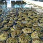 Abalone Farm Bremer Bay WA