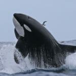 Orca Tours Bremer Canyon Bremer Bay WA - Photo Credit Keith Lightbody