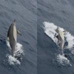 Bremer Canyon Dolphins Bremer Bay WA - Photo Credit Keith Lightbody