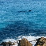 Southern Right Whales - Bremer Bay WA